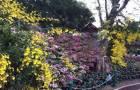 ขายที่สวน 16ไร่ 3 งาน มีต้นสักอายุกว่า 30 ปี ต้นตะฏุ และไม้ผล ขนน ลำใยเป็นต้น