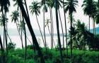 ขายที่ดินบนเกาะสมุย 2แปลงใกล้กัน เนื้อที่รวมประมาณ 7 ไร่ครึ่ง