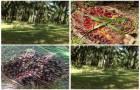 ขายสวนปาล์ม 10 ไร่ ราคา 2800000 บาท เจ้าของขายเอง ซื้อที่ดินเก็บไว้ ไม่ผิดหวังค่ะ