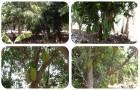 ที่ดินไร่สวนผสม 1 ไร่ไร่ละ 380,000 บาท มีไฟฟ้าปะปาผ่าน มีมะม่วง ขนุน กล้วย กระท้อน ออกลูกแล้ว