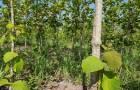 ที่ดิน สวนผึ้ง ราชบุรีเกือบ20ไร่ มีโฉนด