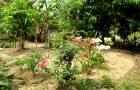 ขายที่ดินติดลำน้ำแม่ริม มีสวนเกษตรอินทรี 2 ไร่ 8 ตารางวา ขาย 1.9 บาท