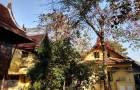 ขายบ้านทรงไทย 2 ชั้น 3 ไร่ ราษฎร์อุทิศ มีนบุรี