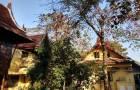ขายบ้านทรงไทย 2 ชั้น ด้านหลังติดคลองแสนแสบ
