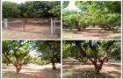 ที่ดินโฉนดมีมะม่วง 3ไร่ติดถนนหน้ากว้าง 120เมตร เขตชุมชน ล้อมรั้วแล้ว