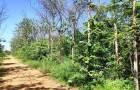 ขายถูกสวนไม้สักอายุ20ปี เนื้อที่ 3 ไร่ ขายเพียง 5 แสน อยู่ต.ช้างตะลูด อ.หล่มสัก จ.เพชรบูรณ์ โทร0813573848
