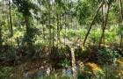 ขายที่ดิน เนื้อที่ 1 ไร่ ทำสวนยางต่อได้ทันที เกาะช้าง จังหวัดตราด โทร 0897513237