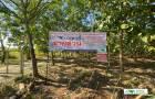 ขายที่ดิน+สวนยางพารา+สวนอ้อย 38-0-43 ไร่ต.ท่าสวรรค์ อ.นาด้วง จ.เลย